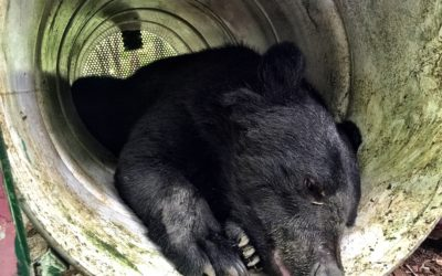 Blog report: research exchange to Tokyo – working with the Japanese Black Bear Project