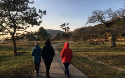 Blog Report: Movement Ecology course in Wales