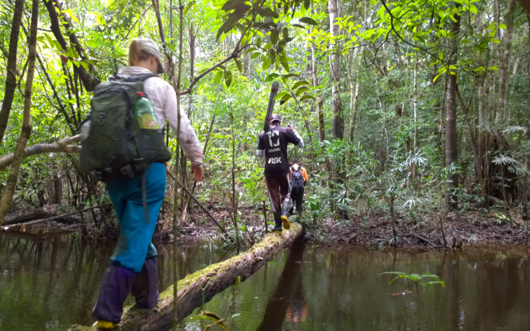 Blog report: Amazonian floodplain forests and remote sensing